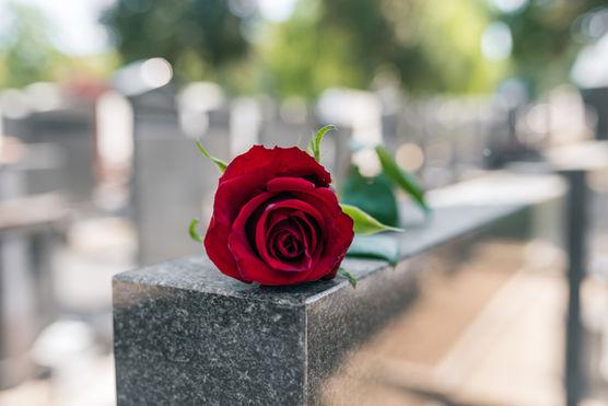 Memorial Red Rose