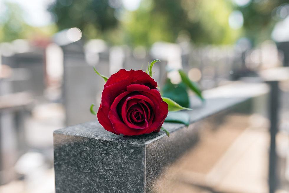 Rosa rossa commemorativa