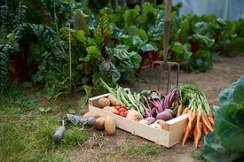 Selbst angebautes Gemüse
