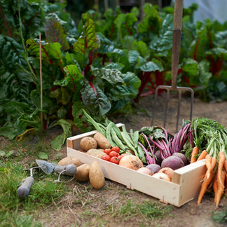 10 Reasons To Plant Your Veggies Now