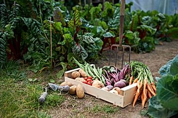 Space for locally Grown Vegetables in our hypoallergeinc food