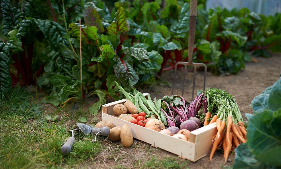 The Large Veggie Box