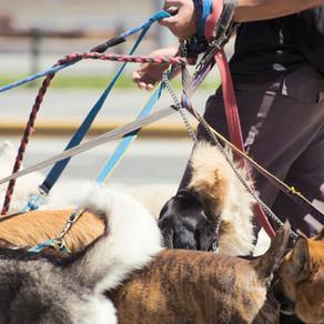 10 Savjeta za šetanje pasa koje bi svatko trebao znati