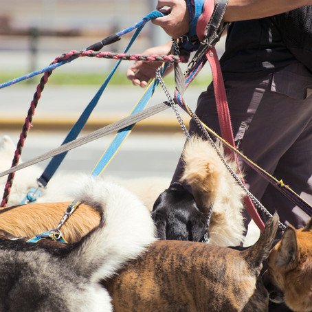 ¿Qué debes considerar para confiarle tu perro a un paseador?