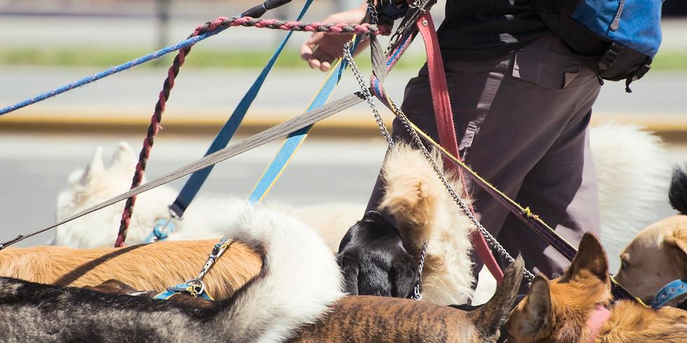 Dr. Howard Memorial Dog Jog