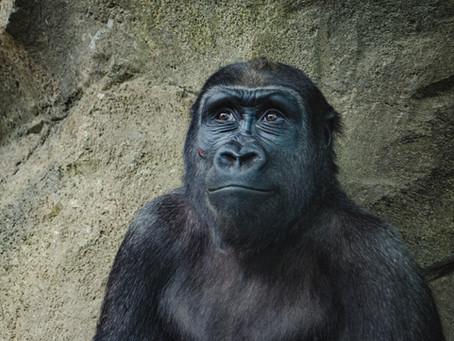 Animals that Might Go Extinct