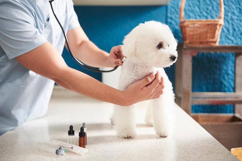 獣医と子犬