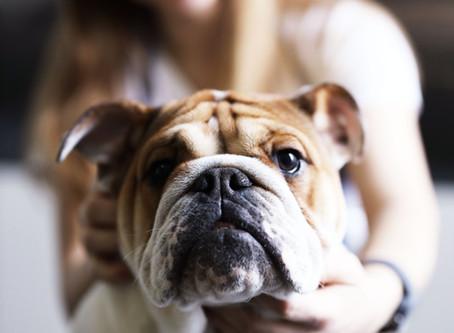 Qu'est-ce que la terre de diatomée et comment l'utiliser pour son chien?