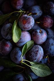 Fruit and Longevity part 3