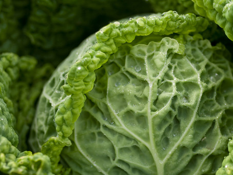 Cabbage's September Leafy Greens: Yeti Edition
