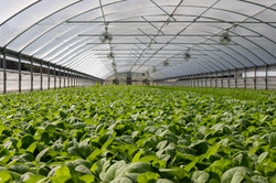 Greenhouse & Precision Agriculture
