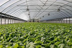 Armax Electric, Agricultural, Farm, Maintenance, Construction