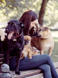 Собаки на скамейке