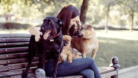 Cosas que puedes hacer con tu mascota el fin de semana