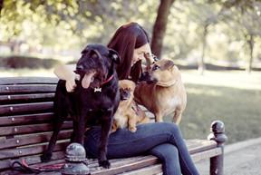 Cani su una panchina