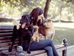 7 Σημάδια ότι ο σκύλος σας σας αγαπά