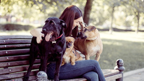 Do You Need Pet Insurance? Here's How to Decide