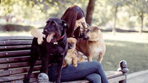 Code Éthique de la Communication animale
