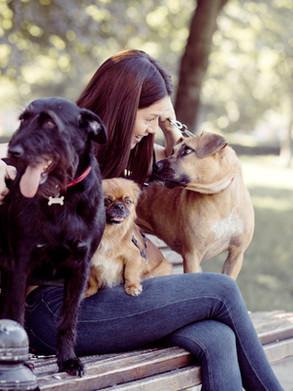 Dog friendly tours