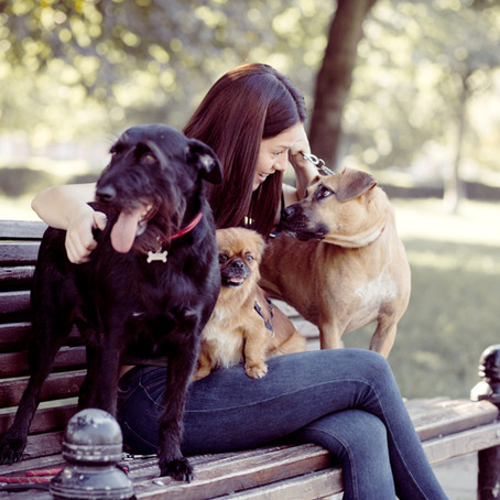 5 Legal Protections Every Pet Parent in New York Should Know