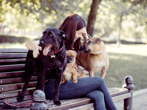 Decompression and Introduction Guidelines for Dogs