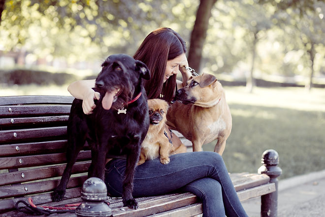Dogs on a Bench