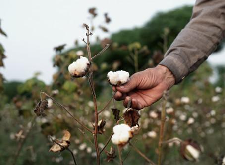 Organic Cotton, Organic Silk & Natural Linen @my.luma
