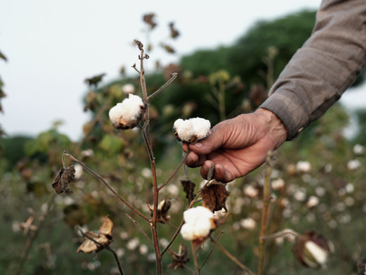 5 reasons why you should buy organic clothing