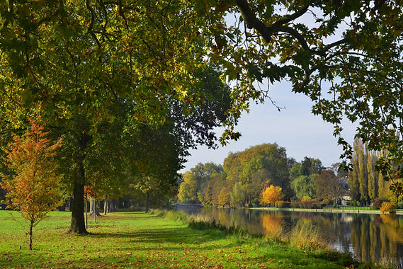Pond in Park