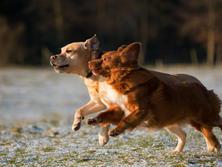 Ambleside Dog Walker
