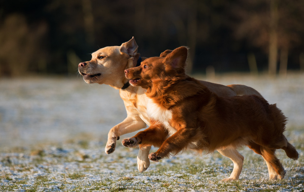Dogs Running at dog day camp