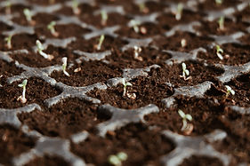 seeds, kleine pflanzen, earth, management