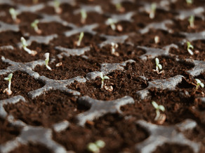 Starting Seeds Indoors: Get Ahead in your Garden Game