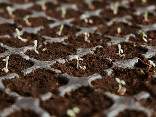 Which country provides the most fertile soil for innovation? And for sustainability?