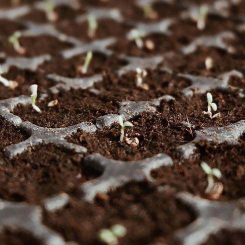 Regalando Semillas: Seed Gift Distribution (1)