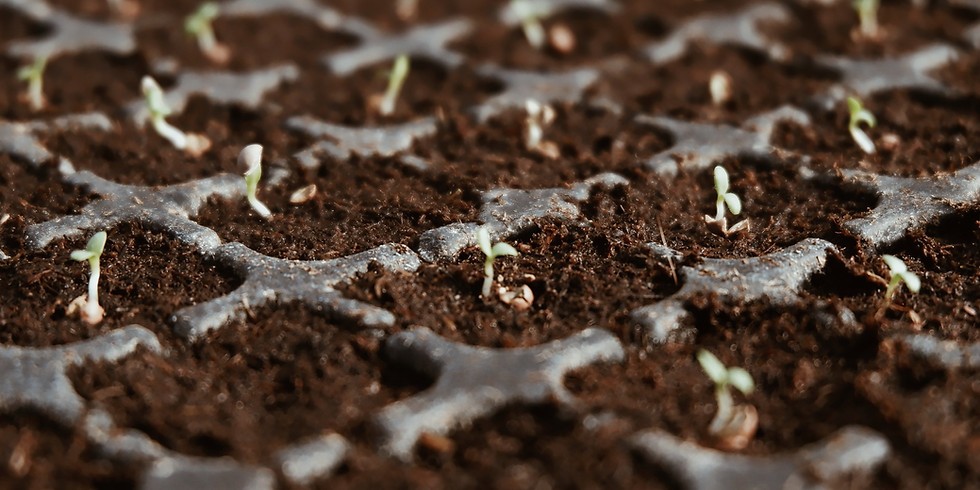 seed starting basics : class description