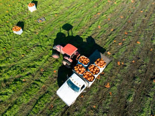 6 Tips for Harvesting Perfect Market Crops