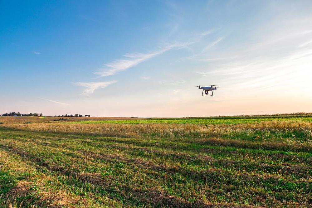 Un dron sobrevuela el cultivo para recopilar datos sobre la humedad del suelo, nivel de químicos, etc.