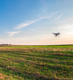 ¿Qué nuevas oportunidades están surgiendo en el sector agroalimentario?