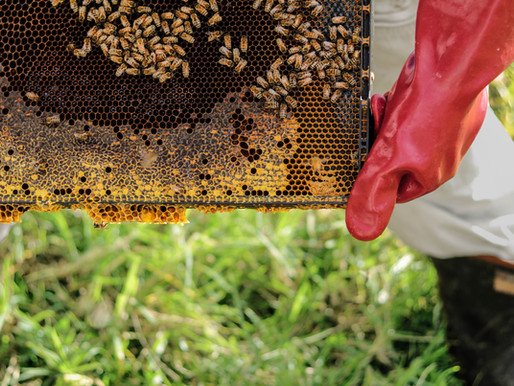Can public attitudes to CRISPR technologies save declining Bee populations post Covid-19?