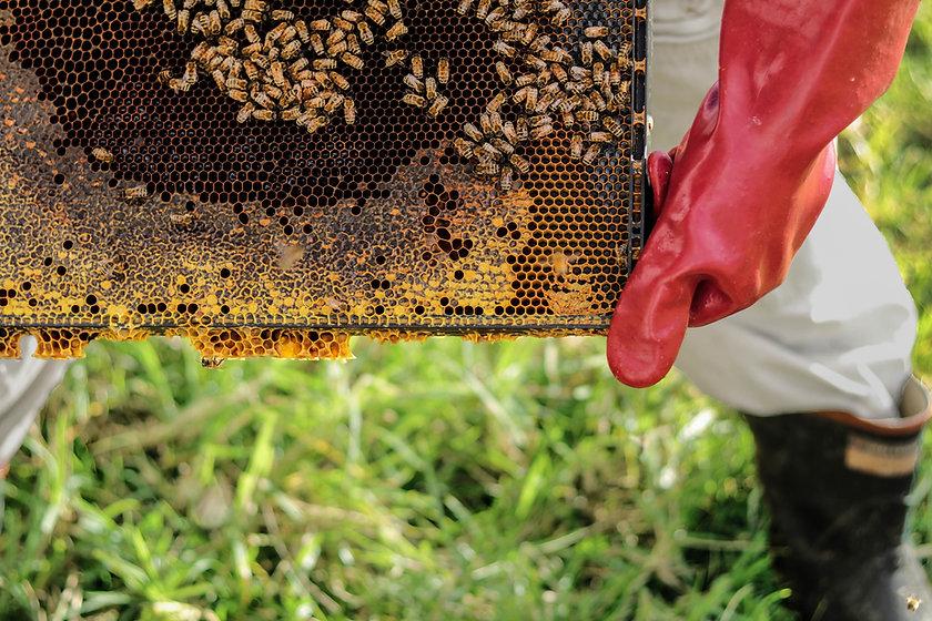 Arı Çiftliği