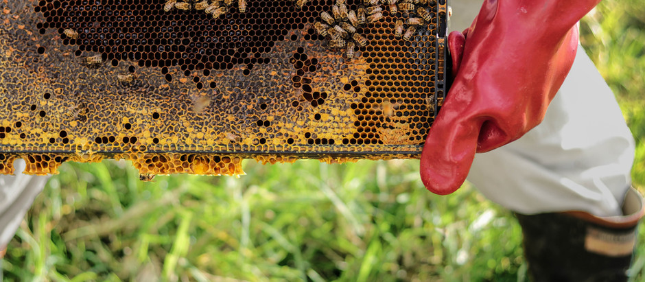 Bio Security Session for New-Bee & Ol-Bees
