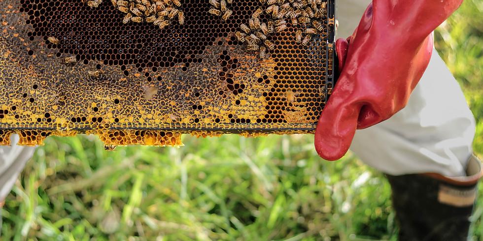 Pollinator/Bee Hotel Workshop