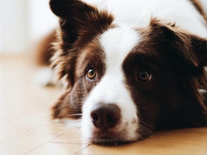 What does it mean to give our dogs SPACE to learn?