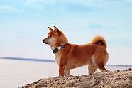 浜辺にたたずむ犬