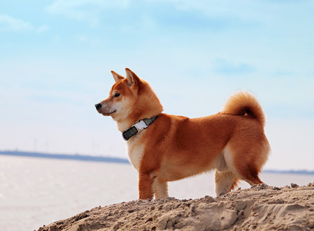 Dog Friendly Beaches In Cornwall