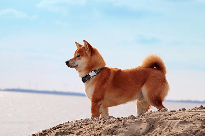 Dog by the Beach