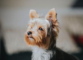 Comment agir si votre chien est craintif dans presque toutes les situations