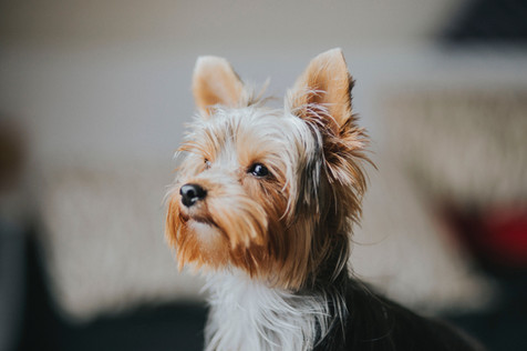 Cão com fome