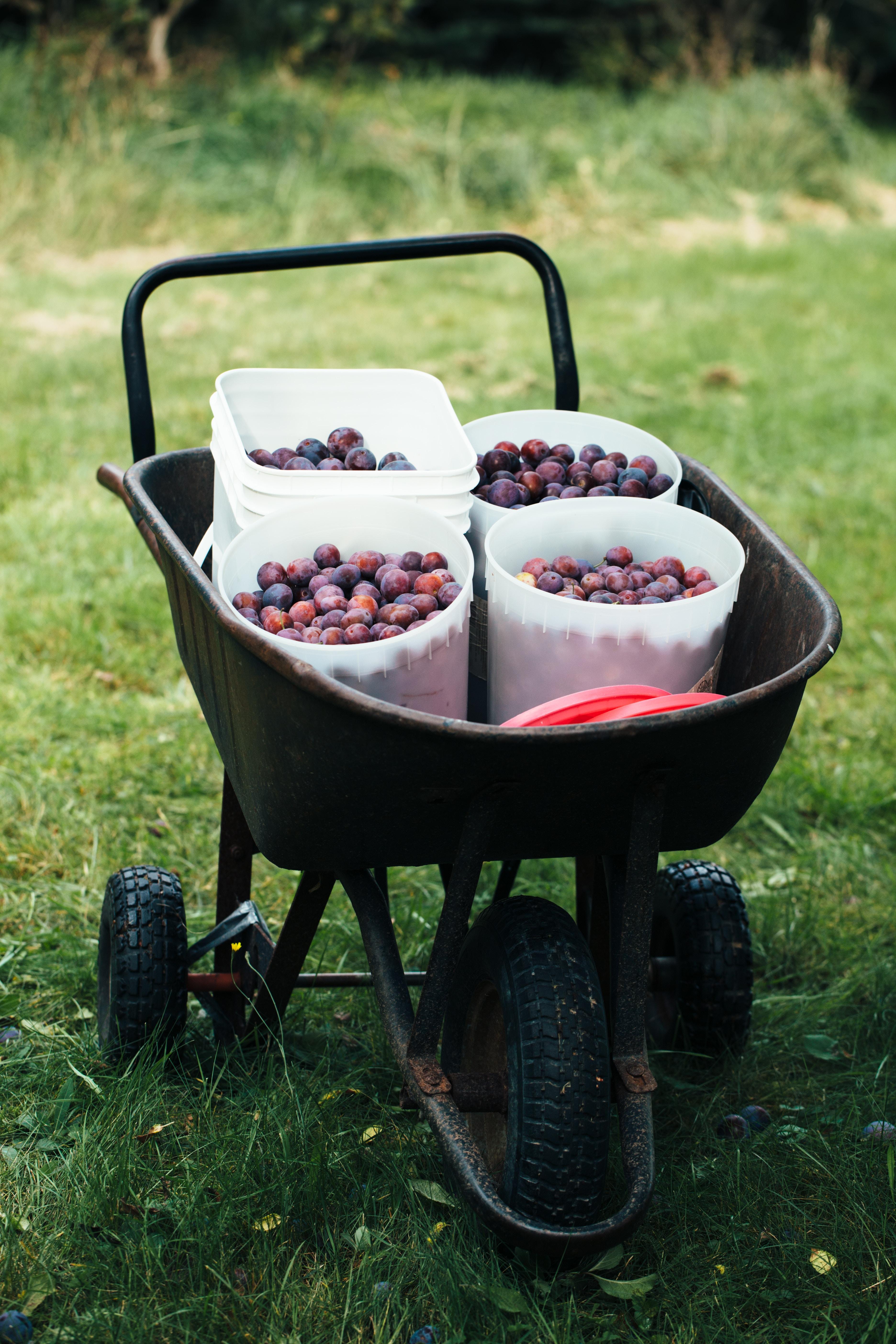 Fruits in Wheelbarrow